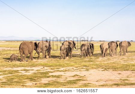 Elephants go away. Savanna. Park Amboseli, Kenya