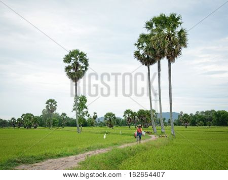 Landscape Of Countryside In Mekong Delta, Vietnam