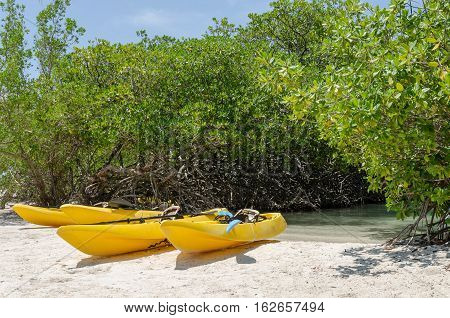 Kayaks At The Mangel Halto Beach In Aruba