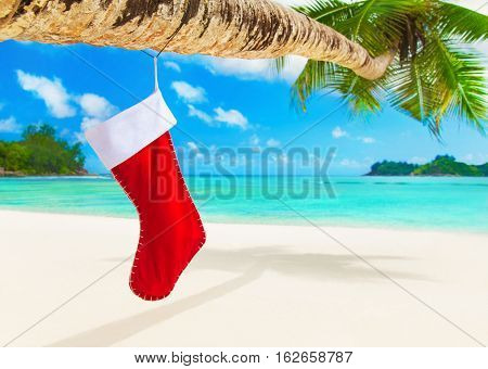 Red Christmas sock with presents on palm tree at exotic ocean beach. Happy New Year and Marry X-mas greeting card for winter travel destinations for tropical vacations concept.