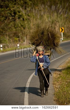 Mae Salong, Thailand - January 28, 2008 :  In the province of Mae Salong, north of Thailand.  A woman of the Akha tribe, carries clumps of herbs and branches, which will be used to make the roof of houses in bamboo.