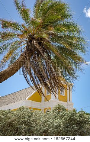 Detail Of A Palm Tree Alone In Curacao