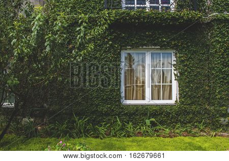 Comfortable english rural cottage window in greenery poster