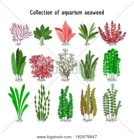 Seaweed set vector illustration. Yellow and brown, red and green aquarium seaweeds biodiversity isolated on white. Sea plants and aquatic marine algae