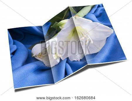 Brochure White Flower Amarillo