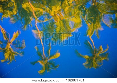 Palm trees reflex on blue water, India