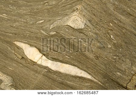 Rough petrified wood textures. Wood turned into stone.