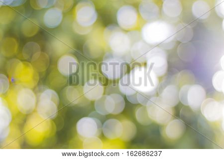 bokeh of tree background, and select blure all background.