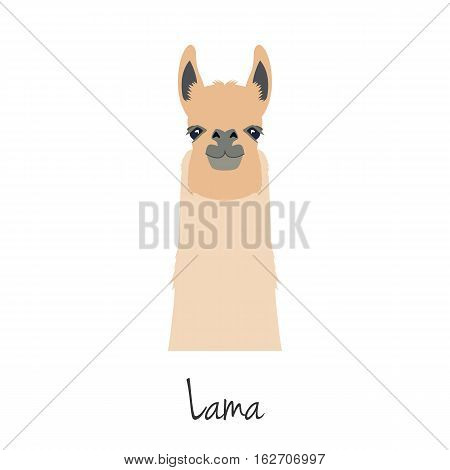 vector lama head isolated. Flat style, cartoon object. poster banner print advertising, design element. mammal, guanaco