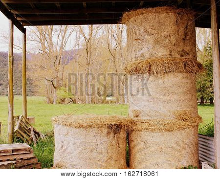 Autumn day at a farm in New Zealand, view of the hay rolls
