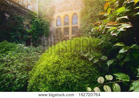 TIVERTON, UK, 13 July 2016: The small window in the wall of an  Knightshayes Castle. Lots of by lush vegetation. Devon. UK