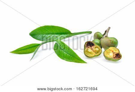 fresh tea seeds and tea leaf isolated on white background