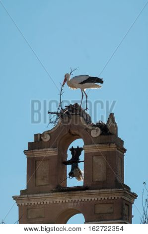 Stork building his nest in a bell tower
