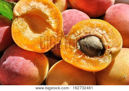 close-up of the fresh apricot fruits outdoors