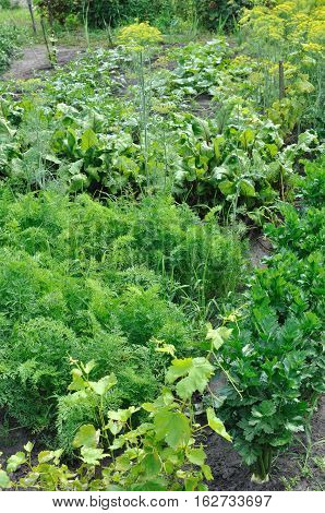 part of the vegetable garden: organically cultivated various vegetables in the vegetable garden vertical composition