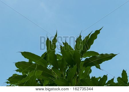 close up green leaves of tropical plants blue s,ky background