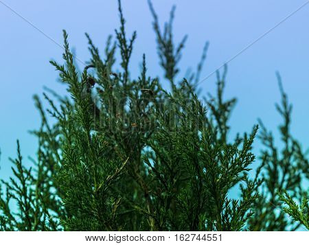 green plant on a background of blue sky
