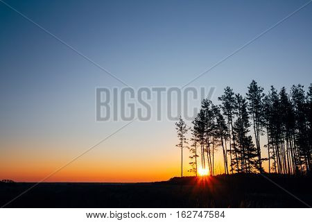 Sunset, Sunrise In Pine Forest. Bright Colorful Dramatic Sky And Dark Ground. Landscape Under Scenic Summer Dramatic Sky In Sunset Dawn Sunrise. Skyline. Copyspace
