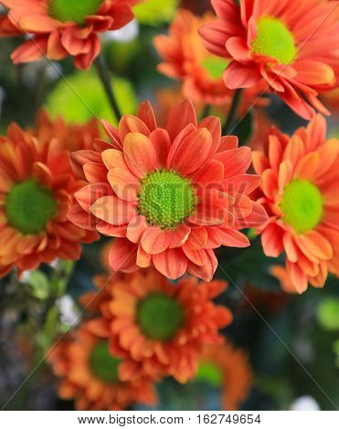 A bunch of beautiful orange sunflowers, focusing on the one centred.