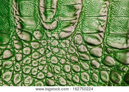 Texture of genuine leather close-up, embossed under the skin of a green crocodile, background