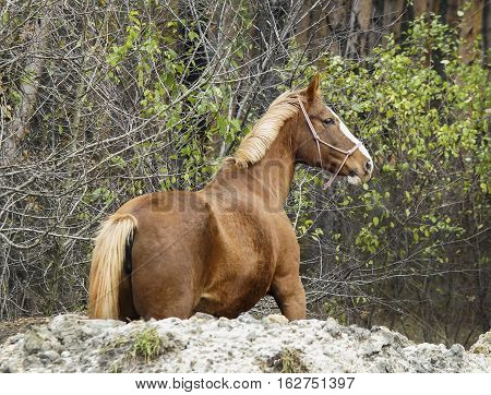 red horse with the white mane and tail is on the heap of sand in the forest