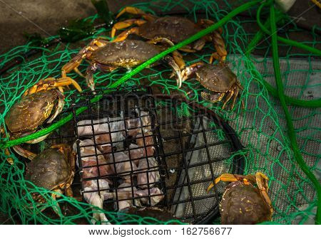 Small Crab Trap