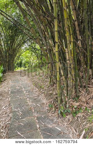 cement block walk path under bamboo in the garden