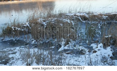 dry grass in snow ice frozen water river nature landscape