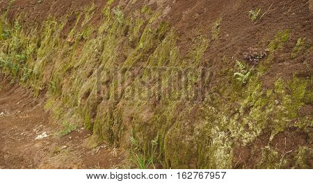 soil cliff with moss and small plants grow in bogor indonesia photo