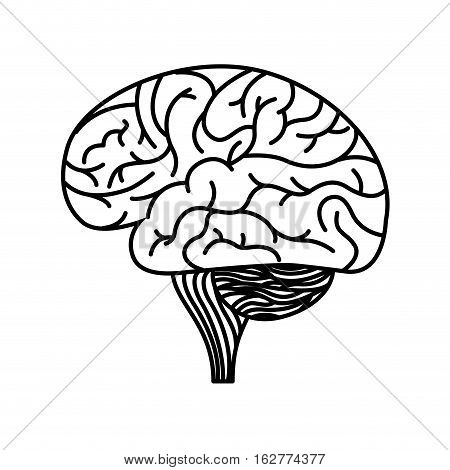 human brain organ icon over white background. vector illustration