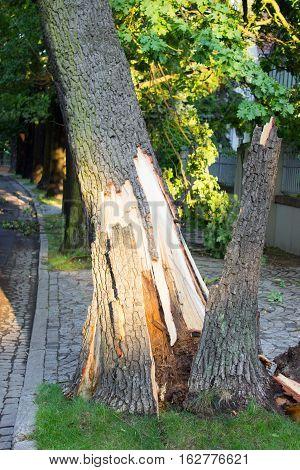 Broken Tree On Road After Storm