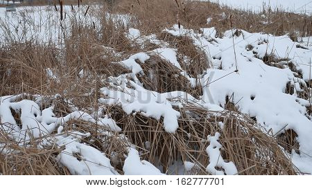 dry grass in the snow on winter river reeds beautiful landscape