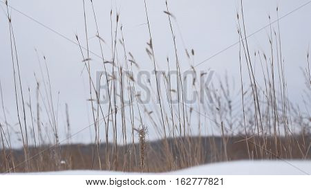 dry grass sways in wind snow winter nature field beautiful landscape