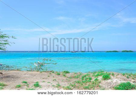 Looking Through The Mangrove Trees In Aruba Beach