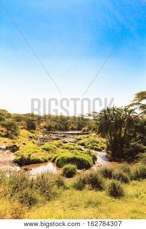Beautiful swamp in the savanna. Serengeti, Tanzania
