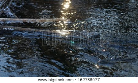 Forest river flowing beautiful frozen ice on dry branch swinging, sunlight, sun nature glare landscape