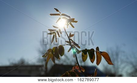 young branch of a tree swaying in wind sunlight silhouette glare of the sun spring morning