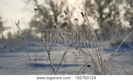 frozen grass sways in the wind in winter snow sunlight falls nature beautiful sun glare