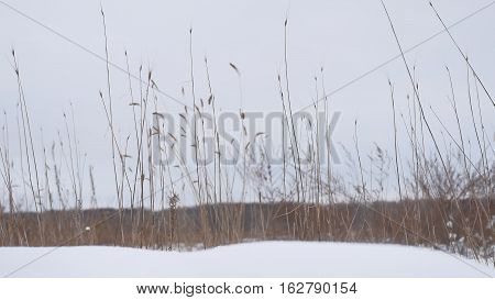 dry grass sways in the wind snow winter field beautiful a landscape nature