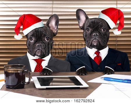Dogs in the office in the new caps. The concept of a Christmas party work on holidays