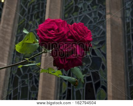 Three red roses infront of a stained glass background with green leaves.