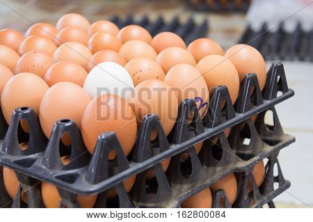 One white egg surrounded by brown eggs in a box. Selective focus on the white egg.