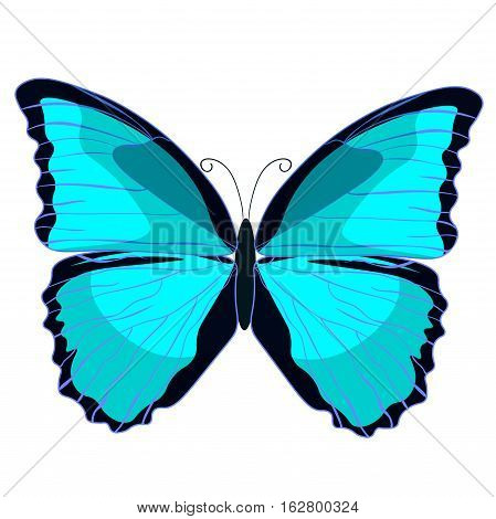 Blue Morpho The Butterfly Monarch. Vector Illustration