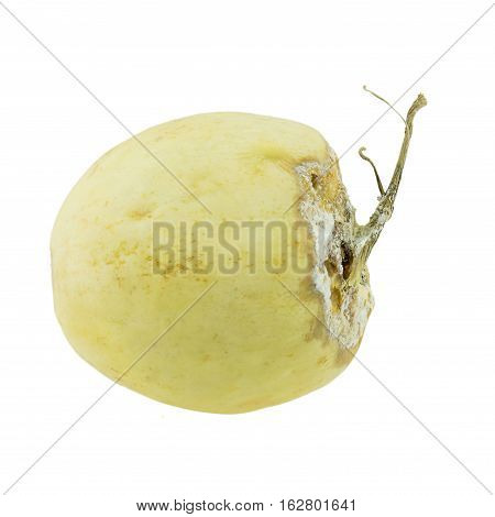 Cantaloupe rotten isolated on a whited background.