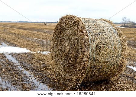 The straw left on the field after the grain harvest the formation of the dense rolls for use as a fuel the production of pellets and briquettes. Close up