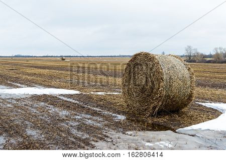 The straw left on the field after the grain harvest the formation of the dense rolls for use as a fuel the production of pellets and briquettes.