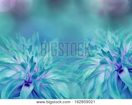 turquoise dahlias flowers. blurred turquoise-blue background. Bright floral composition. card for the holiday. Nature.