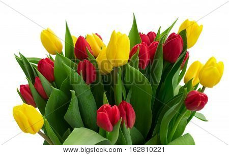 bunch of fresh yellow and red tulip flowers with green leaves close up isolated on white background