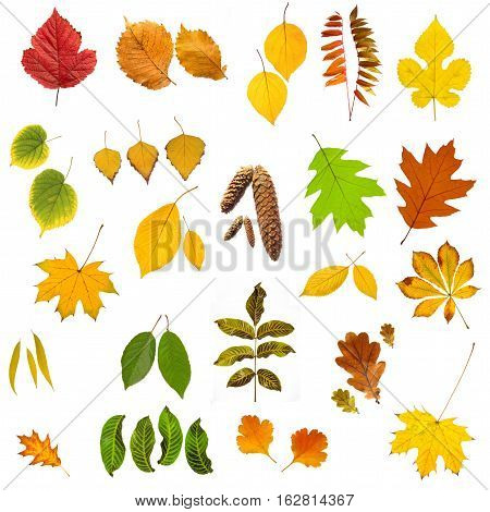 Red, green,  yellow leafs on a white background