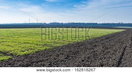 Wide Ukrainian landscape with winter crops .